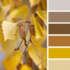 paleta de colores cafés