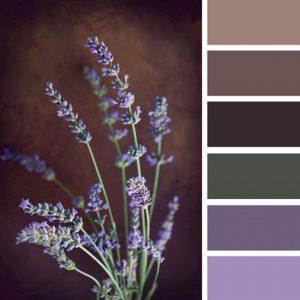 Paleta de colores tonalidades lila