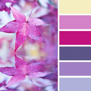 Paleta de colores en tonalidades rosas